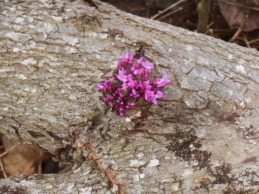 April 12, 2015 flowers 090