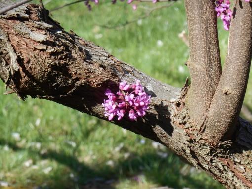 April 12, 2015 flowers 093