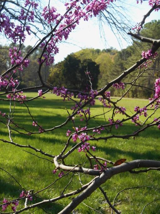 April 12, 2015 flowers 095