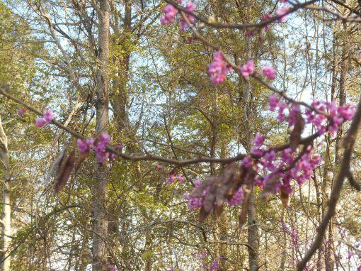 April 12, 2015 flowers 097
