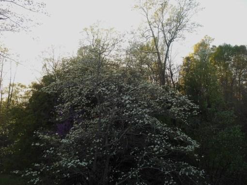 April 12, 2015 flowers 119