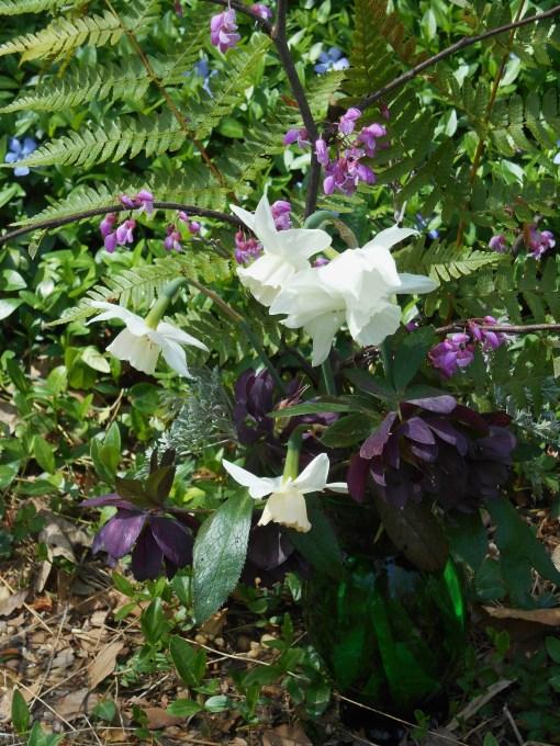 April 13, 2015 spring flowers 003