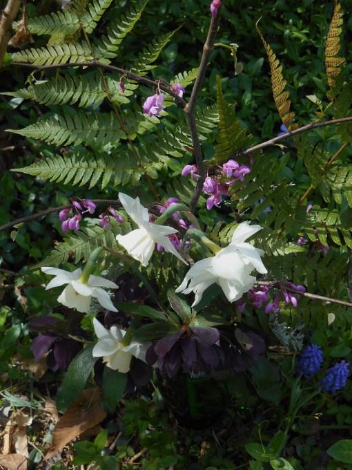 April 13, 2015 spring flowers 005