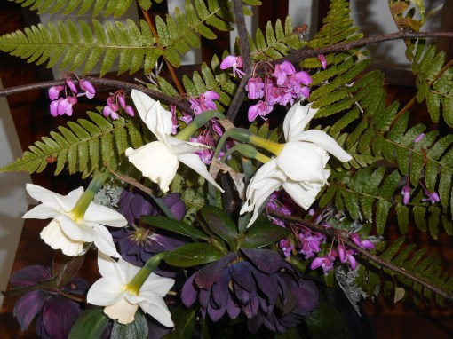 April 13, 2015 spring flowers 016