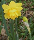 April 13, 2015 spring flowers 026
