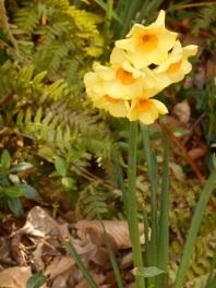 April 13, 2015 spring flowers 030