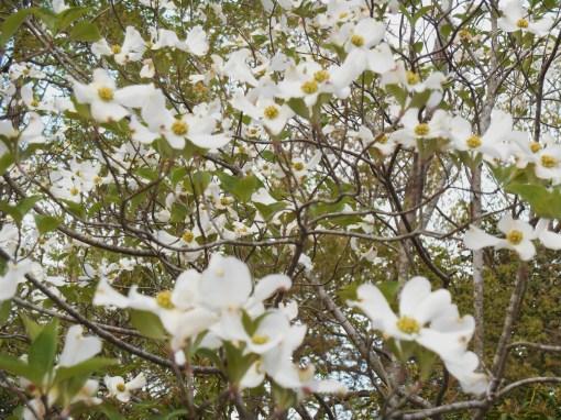April 17, 2015 spring garden 007