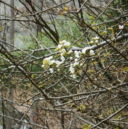 April 3, 2015 flowers 004