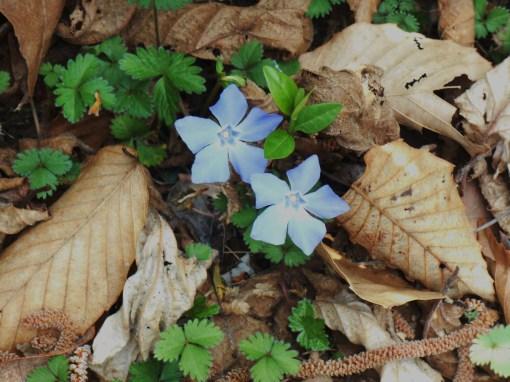 April 3, 2015 flowers 005