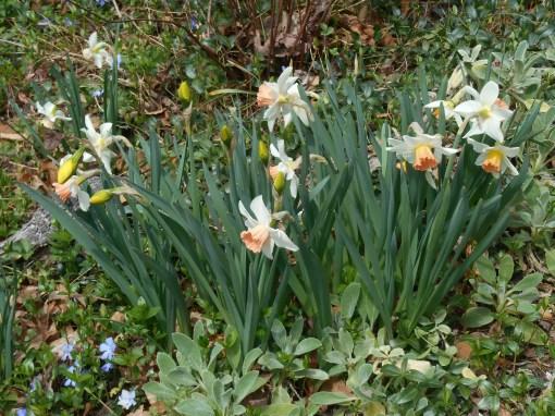 April 3, 2015 flowers 006