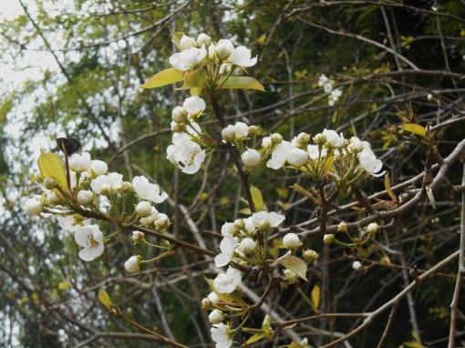 April 3, 2015 flowers 016