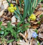 April 3, 2015 flowers 025
