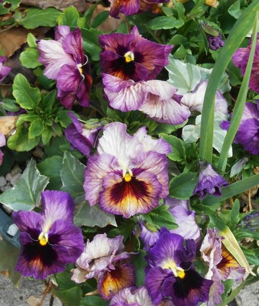 April 3, 2015 flowers 031