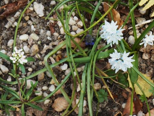 April 3, 2015 flowers 039