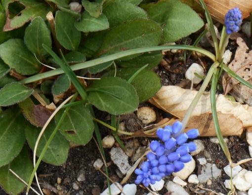 April 3, 2015 flowers 040