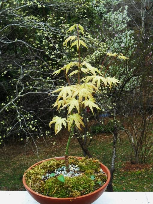 April 8, 2015 spring garden 011