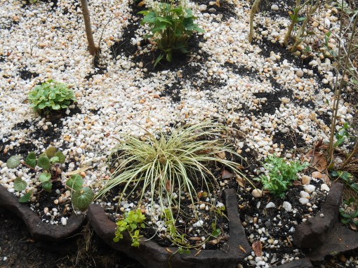 April 8, 2015 spring garden 037