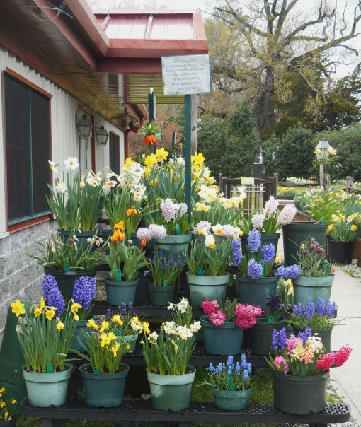 Containers for sale at the Heath's Bulb Shop last April