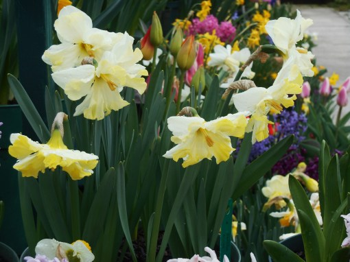 April 9, 2015 Gloucester 015
