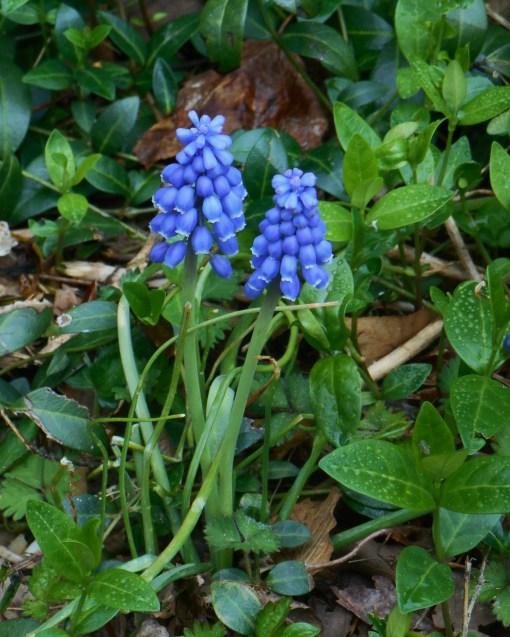 April 9, 2015 planting 001