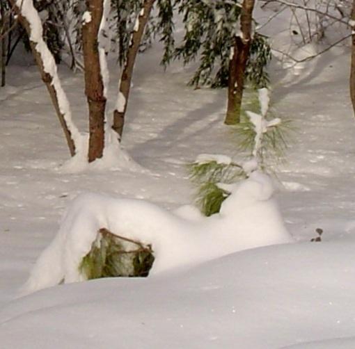 Dec. 27 snow 018