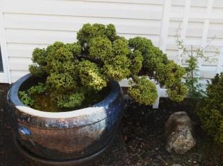 April 30, 2015 Oregon in April 315