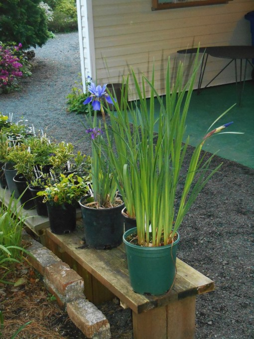 Divisions from the garden are offered for sale by volunteers to help raise funds for the garden's support.