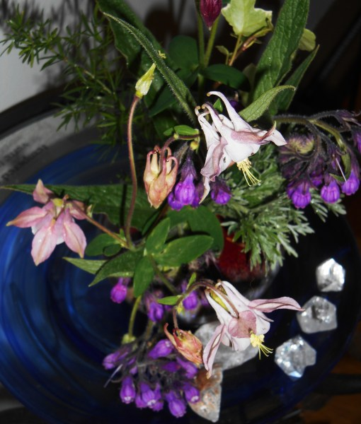 May 1, 2015 flowers 021