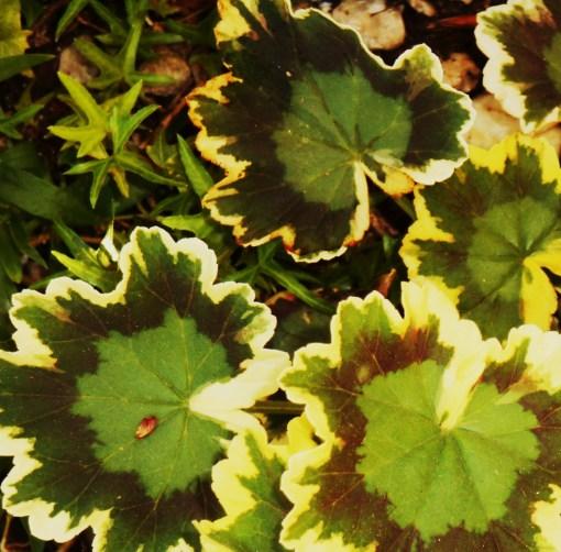 May 25, 2015 foliage 004
