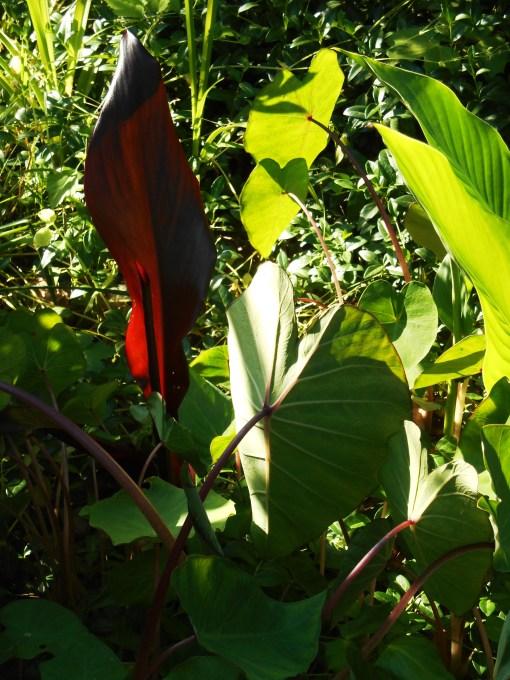 May 25, 2015 foliage 023