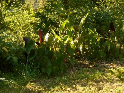 May 25, 2015 foliage 042
