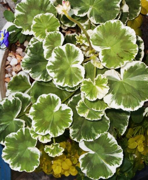 May 25, 2015 foliage 053