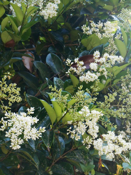 May 28, 2015 garden 031