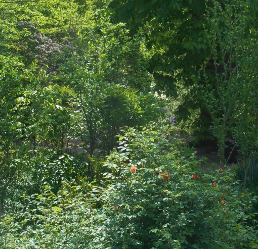 May 7, 2015 garden 017