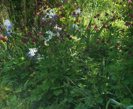 May 7, 2015 garden 022