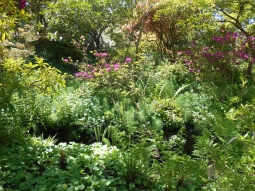 The Connie Hansen Garden in late April.