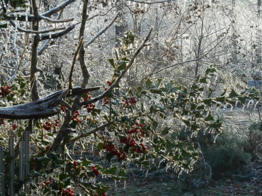 January 15, 2015 ice garden 006
