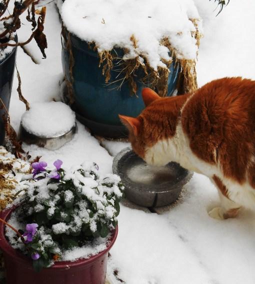 January 27, 2015 snow 005