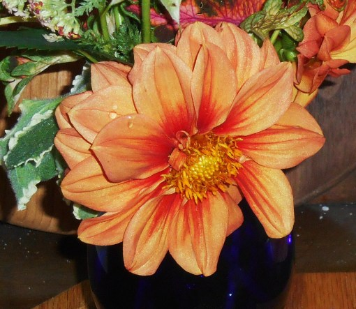 June 1, 2015 in a vase 004
