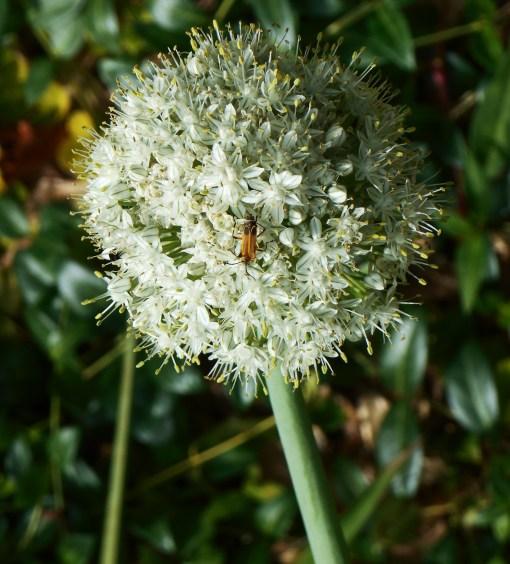 June 17, 2015 pollinators 002