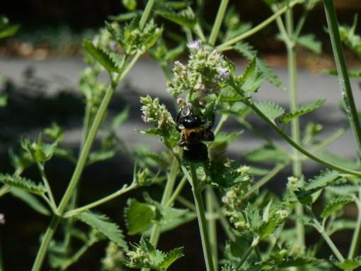 June 18, 2015 bees 022