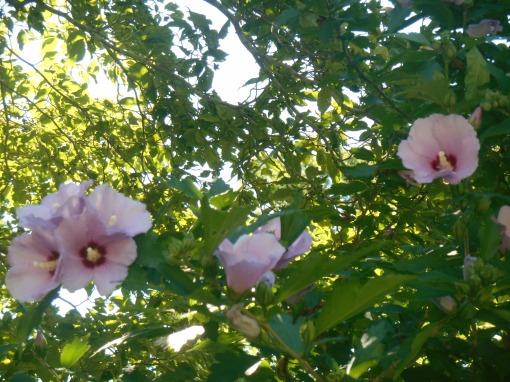 June 20, 2015 garden 003