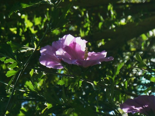 June 20, 2015 garden 019