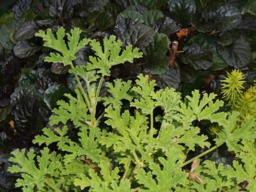 June 22, 2015 foliage 002