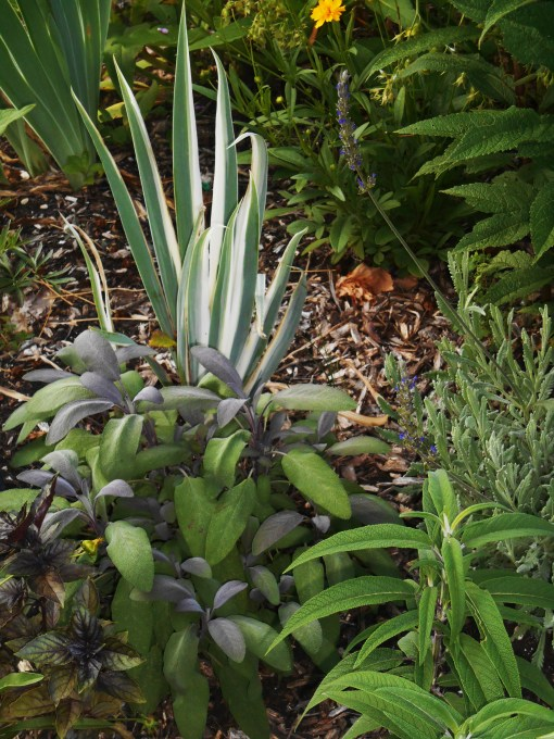 June 22, 2015 foliage 007