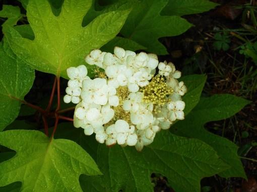 June 3, 2015 garden in rain 004