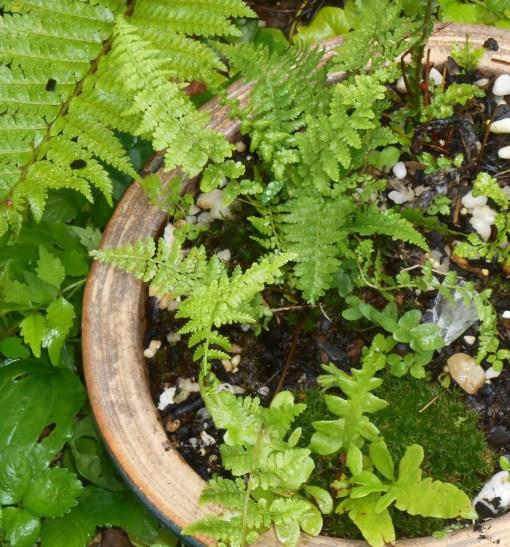 June 3, 2015 garden in rain 024