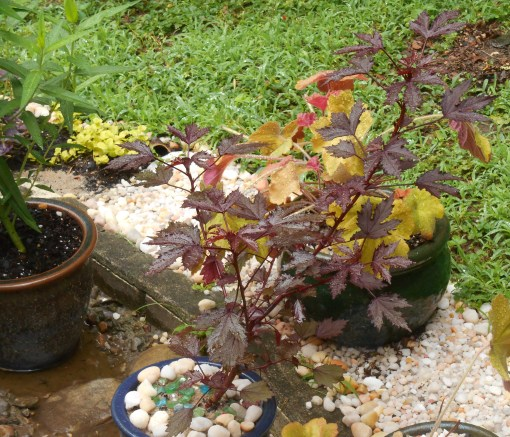 June 3, 2015 garden in rain 028