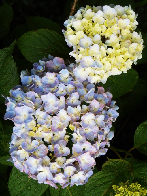 June 5, 2015 flowers 012