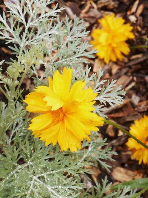 June 5, 2015 flowers 028